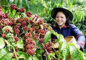 Cà phê Đức Lập là thương hiệu nổi tiếng ở xứ sở cà phê