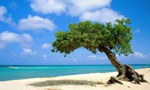 bãi biển Trà Cổ đẹp và quyến rũ