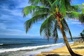 Bãi Rạng xinh đẹp với những rặng dừa đu đưa trước gió
