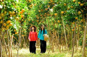 Du lịch Cần Thơ về miệt vườn, bạn tha hồ vùng vẫy trong những vườn trái cây tươi ngon