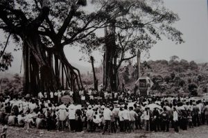 Cây đa Tân Trào trong lịch sử dân tộc