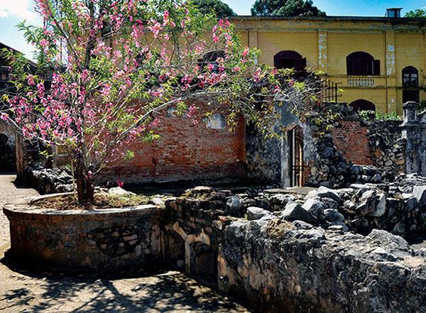 Cây đào Tô Hiệu mùa xuân về