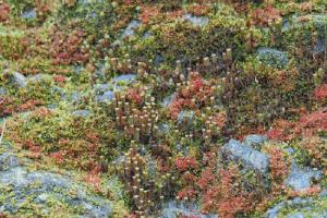 Mê mẩn nhiều loài thực vật trên núi