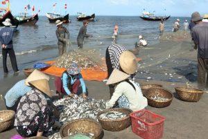 Thú vị chợ cá Quan Lạn vào mỗi sáng sớm
