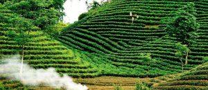 Đồi chè huyện Phú Lương