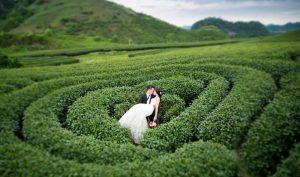 Nhiều đoi chụp ảnh cưới tại đây