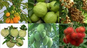 Về du lịch Đồng Nai để ngập mình trong hoa quả tươi ngon