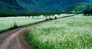 Mai Châu là điểm đến tuyệt vời cho du khách du lịch Hòa Bình