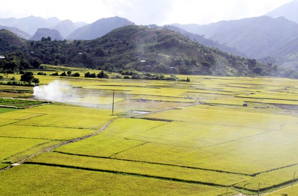 Những thung lũng trồng lúa ở Vân Bàn