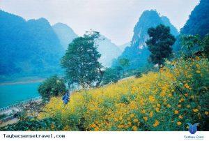 Cảnh đẹp mộng mơ trên bờ hồ.Những bông hoa khoe sắc rặc vàng tô điểm cảnh sắc hồ núi