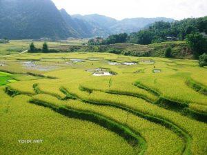 Ruộng bậc thang ở Lũng Vân