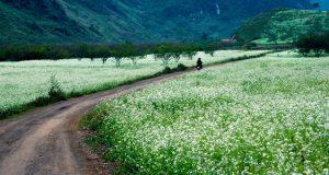 Đường về khu du lịch Mai Châu