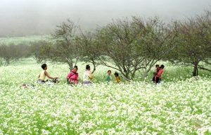 Mai Châu vào mùa xuân đẹp rực rỡ, thơ mộng