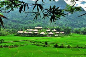 Homestay ở Mai Châu nằm giữa cánh đồng