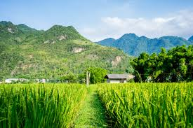 Bản làng nằm dựa lưng vào núi, trước mắt là cánh đồng