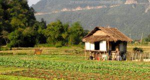 Ngôi nhà nhỏ nằm trên cánh đồng