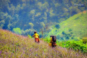 Sắc đẹp ngày xuân núi rừng, cỏ cây hoa lá như bừng lên ánh xuân