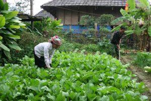 Những luống rau trong bản làng Mường Than