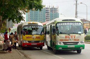 Xe buýt là phương tiện bạn có thể sử dụng để ngắm hoa hướng dương 2018