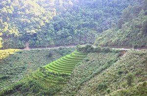 Núi rừng huyện Ngân Sơn