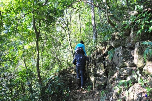 Công cuộc khám phá ngũ động phải luồn mình trong rừng nguyên sinh