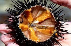 Nhum biển Sa Huỳnh ngon, bổ dưỡng