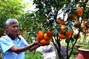 Người nông dân với niềm vui mùa quýt
