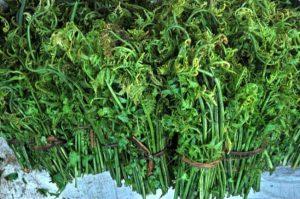 Rau dớn giống cây dương xỉ, xào tỏi ăn là ngon nhất