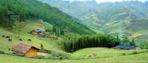 Rừng thông Yên Minh như Đà Lạt miền Bắc