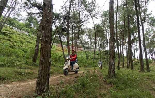 Những con đương nhỏ trong rừng thông để du khách lượn lờ, hít không khí trong lành, mát mẻ