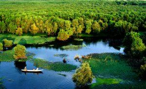 Rưangf trà Trà Sư mang vẻ đẹp vùng sông nước Nam Bộ