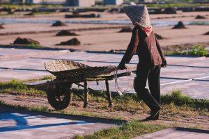 Những diêm dân chở những xe muối về kho sau ngày làm việc mệt nhọc