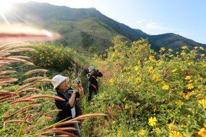 Săn hoa dã quỳ nở khi đi du lịch Kon Tum