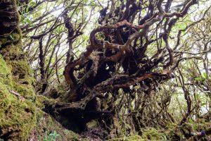 Dây quấn với những hốc cây, ta liên tưởng đến phim của Holywood