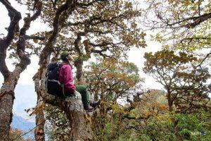 Những cành cây cổ thụ rêu phong