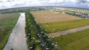 Cánh đồng lúa ở huyện Tam Nông