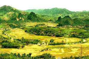 Cảnh đẹp của cánh đồng ở Tân Sơn