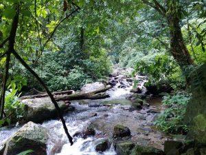Mộ dòng suối trong VQG Xuân Sơn