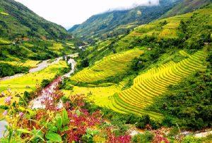 Ngất ngay cảnh sắc thung lũng Mường Hoa vào mùa gặt