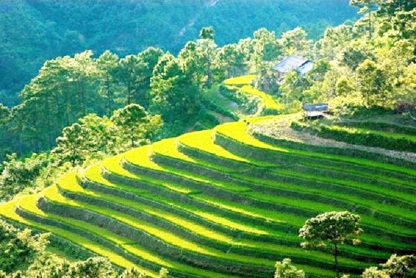 Ruộng bậc thang ở Lai Châu