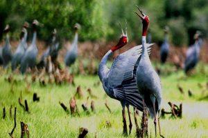 Du lịch Đồng Tháp tham quan vườn quốc gia Tràm Chim