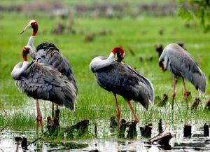 Những con chim hấp dẫn ở Tràm Chim Vị Thủy