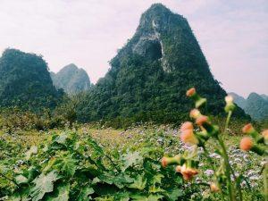 """Trong thung lũng có một ngon núi đặc biệt, """"núi thủng"""" nằm giữa đồng hoa đồng nội .Chắc ai cũng muốn lên trên ấy xem nó thế nào"""