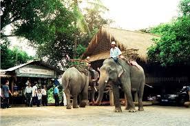 Buôn Đôn có truyền thống thuần dưỡng voi