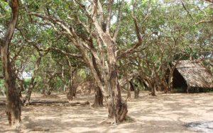 Vườn nhã trăm tuổi ở Bạc Liêu