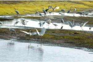 Đây là nơi trú ngụ của những đàn chim di cư về phương Nam tránh rét