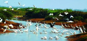 Vườn quốc gia Xuân Thủy- khu sinh quyển Ramsar đầu tiên của nước ta