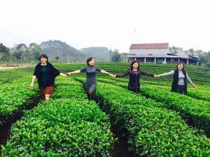 Những đồi chè ở huyện Yên Thế
